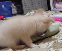 20110506_dog1