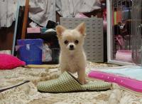 20110506_dog3