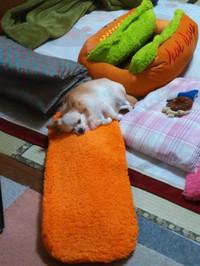 20161115_dog800