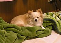 20161117_3dog