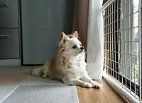 20170526_6dog