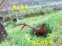 20191211_1birds